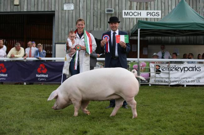 100th Royal Welsh Show Champion of Champions Pig Supreme Champion 2019, Offham Theresa 32nd, a Welsh Pig gilt, bred and exhibited by Wakeham-Dawson and Harmer. Photo: 1st Class Images