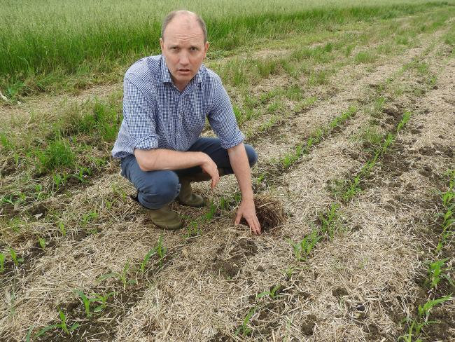 Richard Harding at ProCam's no-till potato trial site, where wide row crops, established following strip tillage, have now been drilled.