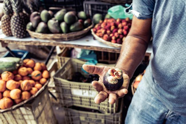 Brazilian farmer holding mangosteen fruit in his hand. Photo: SEKEM Initiative