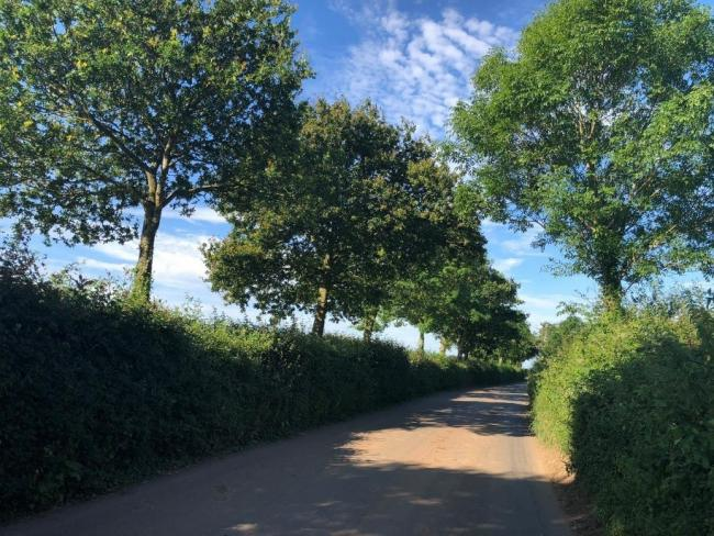 A dense, well-managed hedgerow with trees. Picture: Megan Gimber