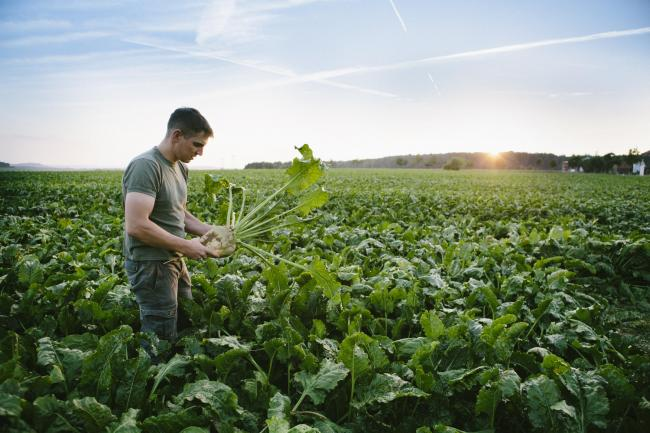 New sugar beet contract terms have been announced