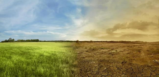 Landscape of meadow field with the changing environment concept of climate change.