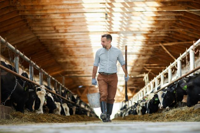 Conditions are tough for dairy farmers