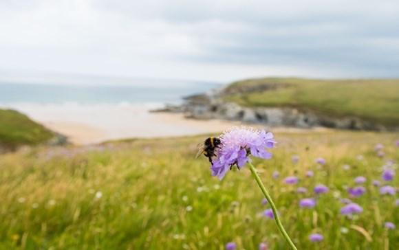Wildflowers will connect the coasts across Cornwall