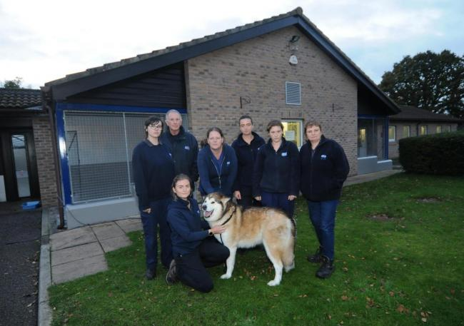 Deputy manager Gaynor Cannings with staff and Nushka.Theft at RSPCA Ashley Heath. Picture: Tom Gregory
