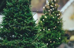 Between six and eight million real Christmas trees are sold in the UK every year