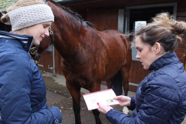 BEVA launches scheme to tackle equine obesity. Picture: BEVA