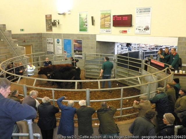 Sedgemoor auction ring