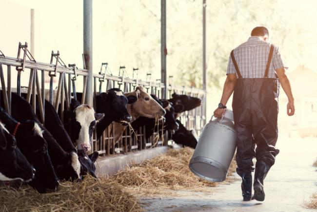 Dairy farmers need support