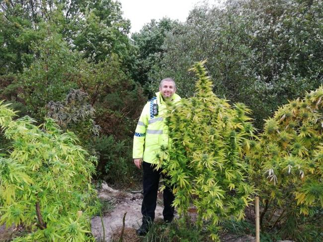 The 'interesting' plants. Picture: Purbeck Police