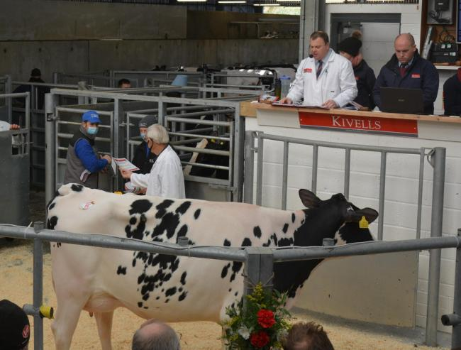 The 27th Annual Holsworthy Dairy Event