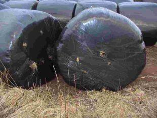 South West Farmer: Seal punctures immediately