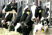 Landlords of tenant dairy farmers are being urged to review rents