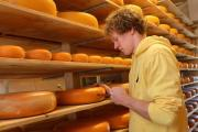 Giel Spierings, owner and creator of Cornish Gouda, Talvan Farm, Cornwall. Taking a core sample to check for taste.