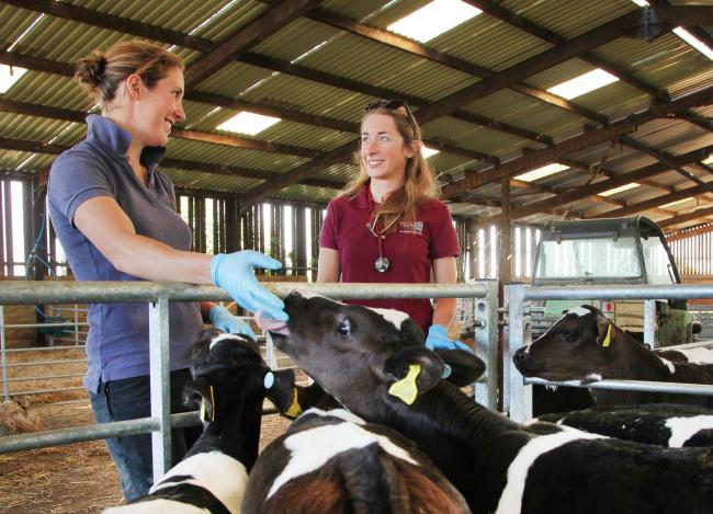 Focus on colostrum and proactive vet support pays off for Bideford Dairy Unit