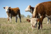 NBA Beef Expo 2016 to host Future Beef Farmer Challenge