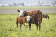 £7m awarded for bovine TB research