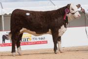 The female champion, Dendor Molly 44th from D. E. E. D. and A. L. Jones sold for 5,700 gns.