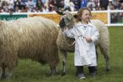 Sheep entries are up