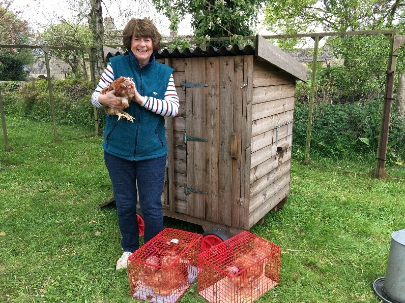 Writer, broadcaster and entertainer Pam Ayres adopts four ex-commercial hens