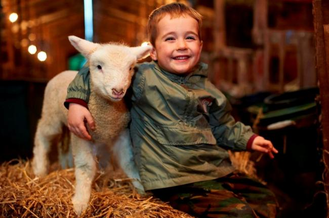 Polzeath farmstay invites families to experience lambing this spring
