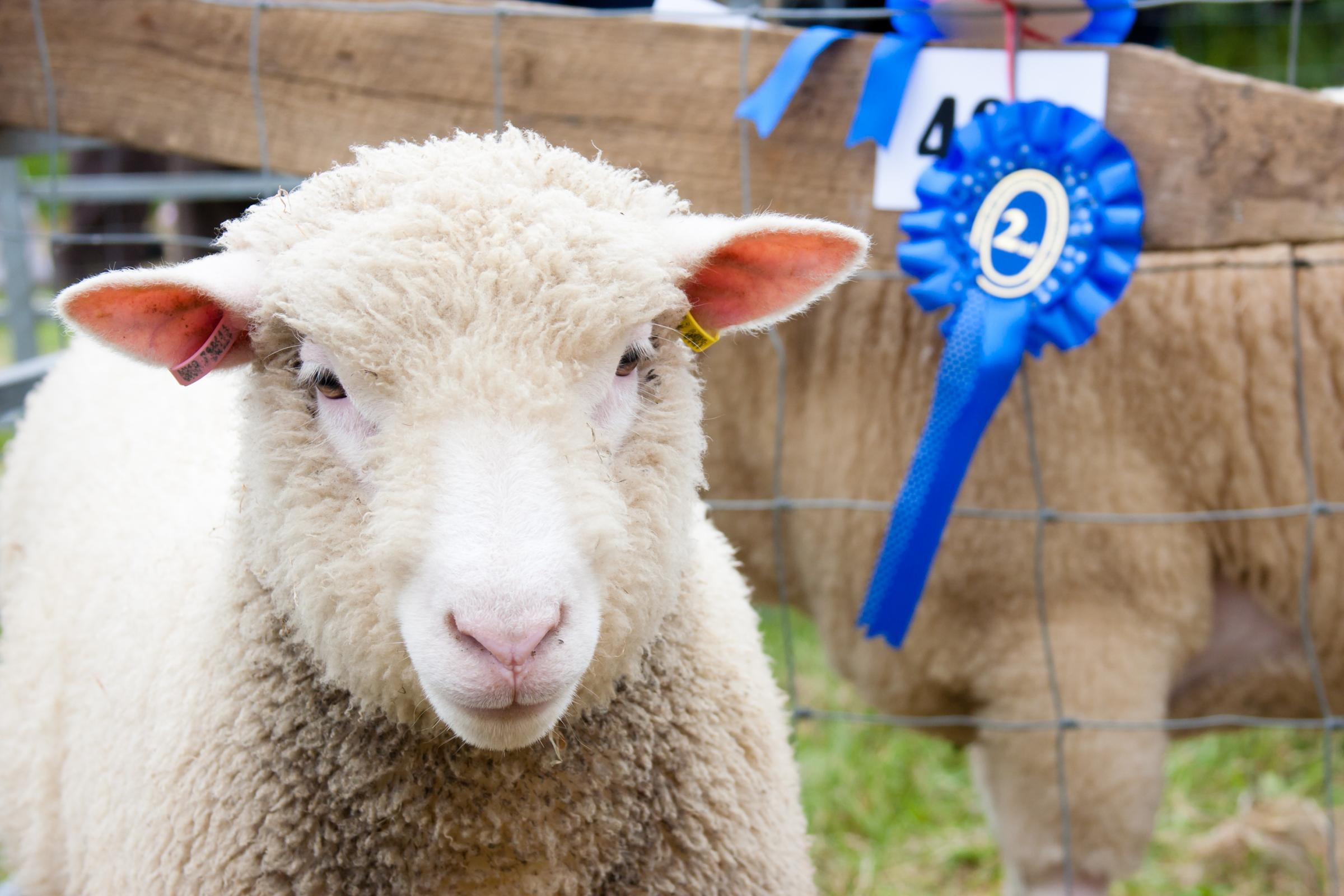 Devon County Show 2018: entries livestock classes open