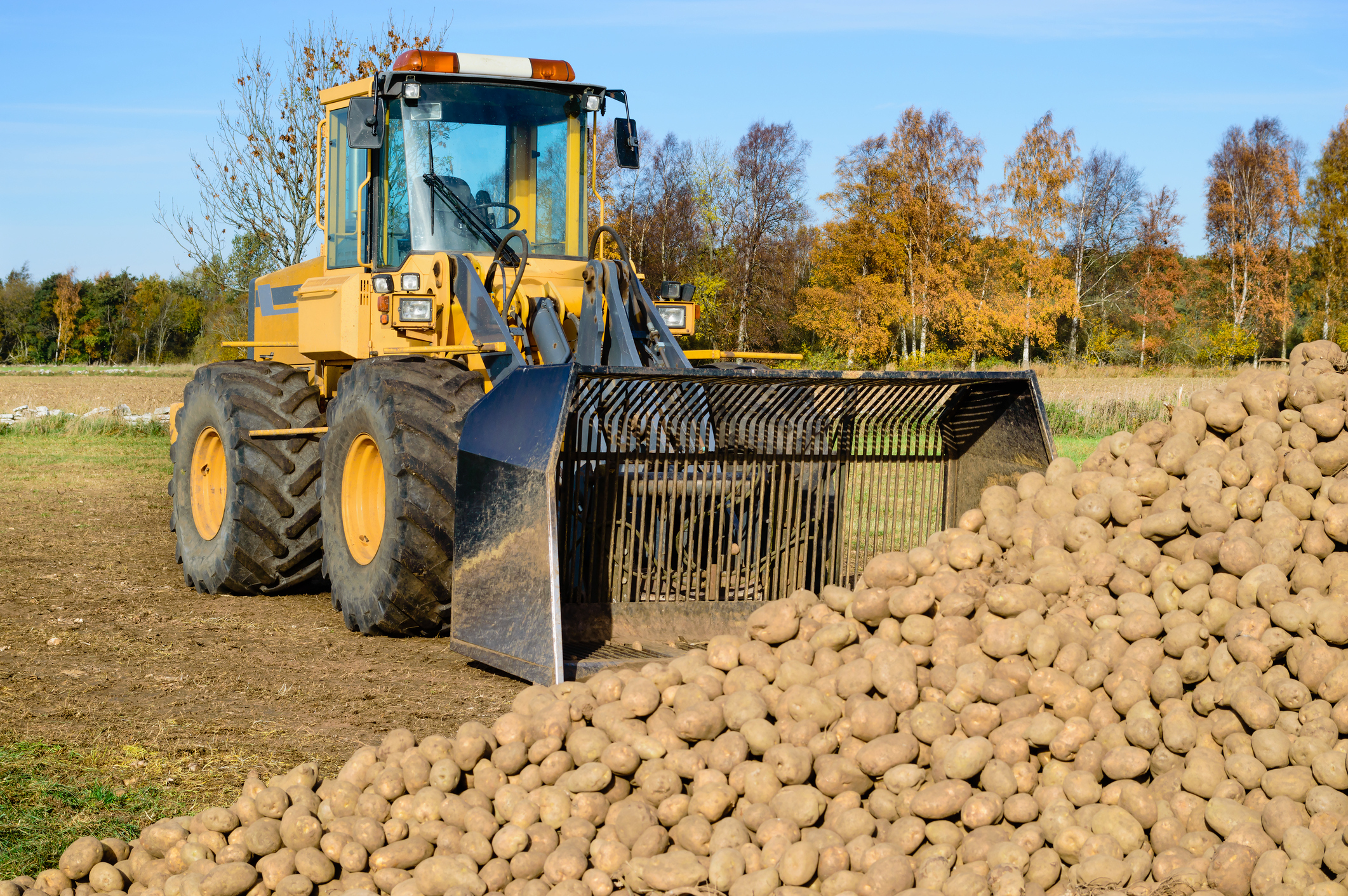 Controlled release fertilisers boost potato yields and meet Defra's water rules