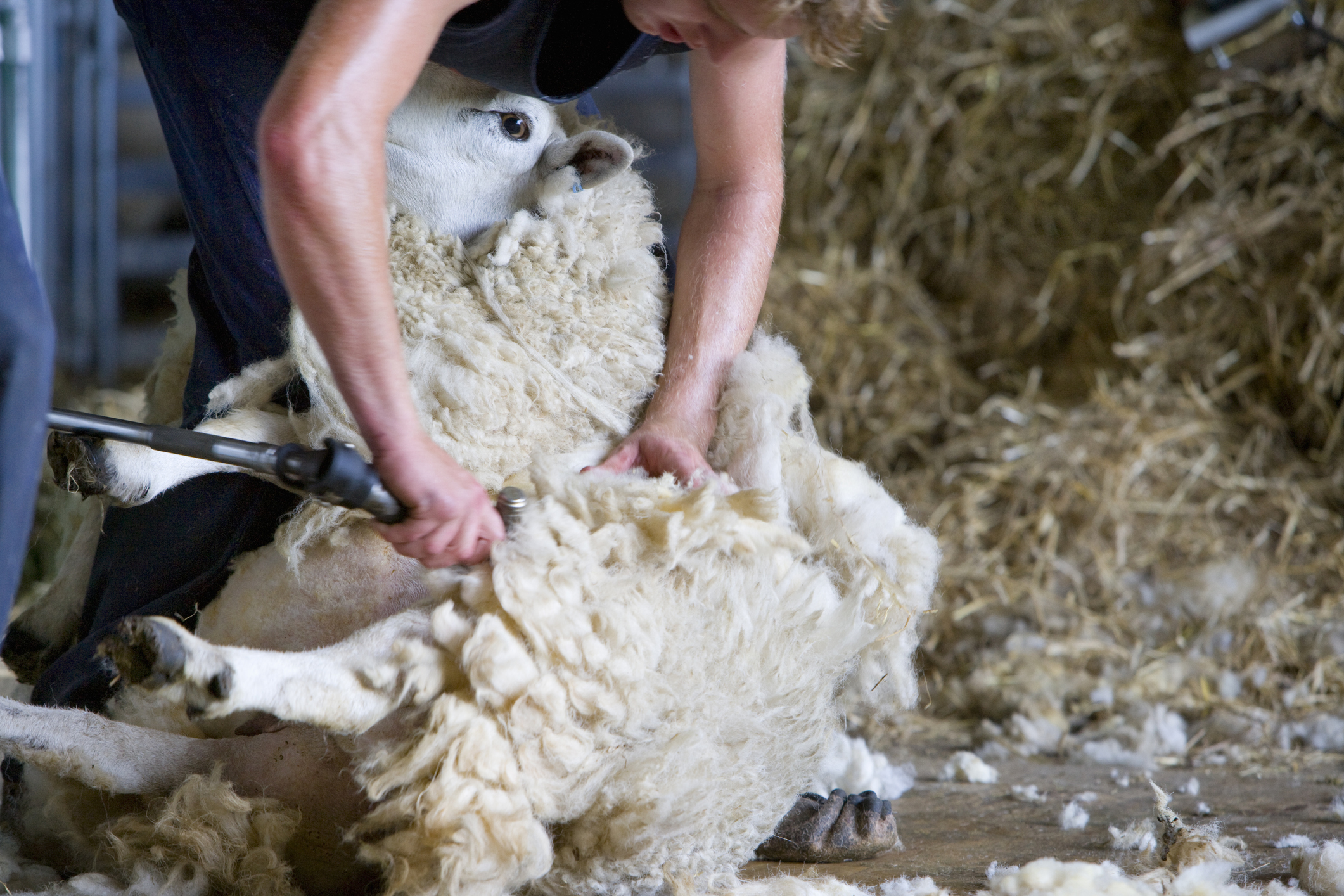 Sheep shearing courses in the south west