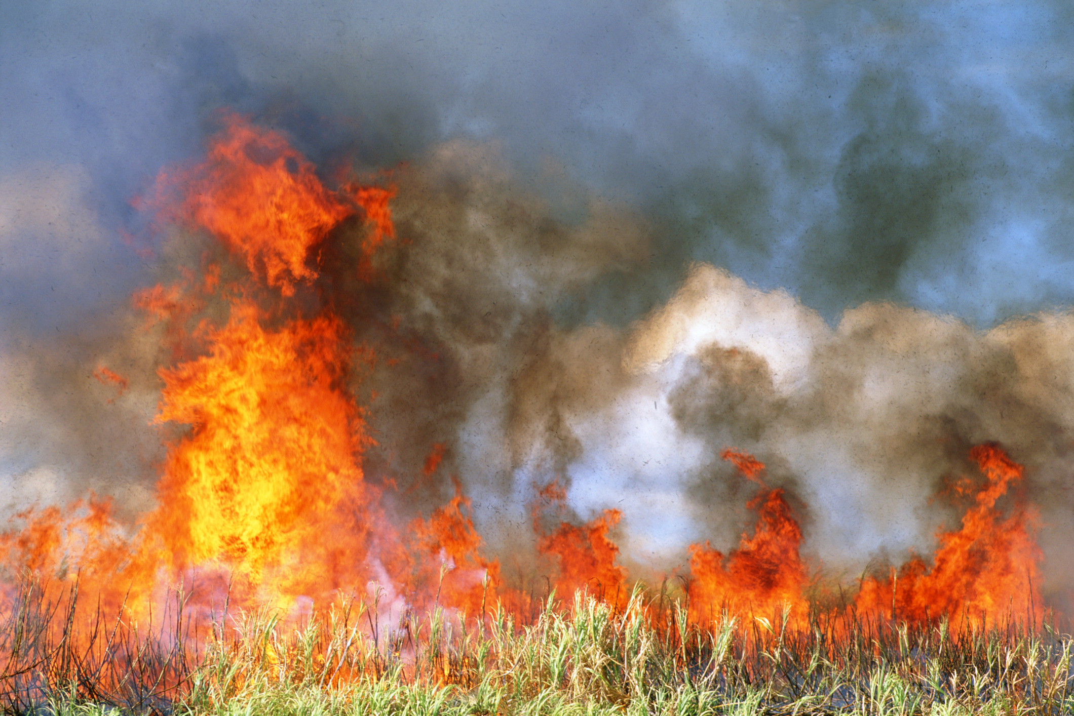 Dry June sparks fear of fires