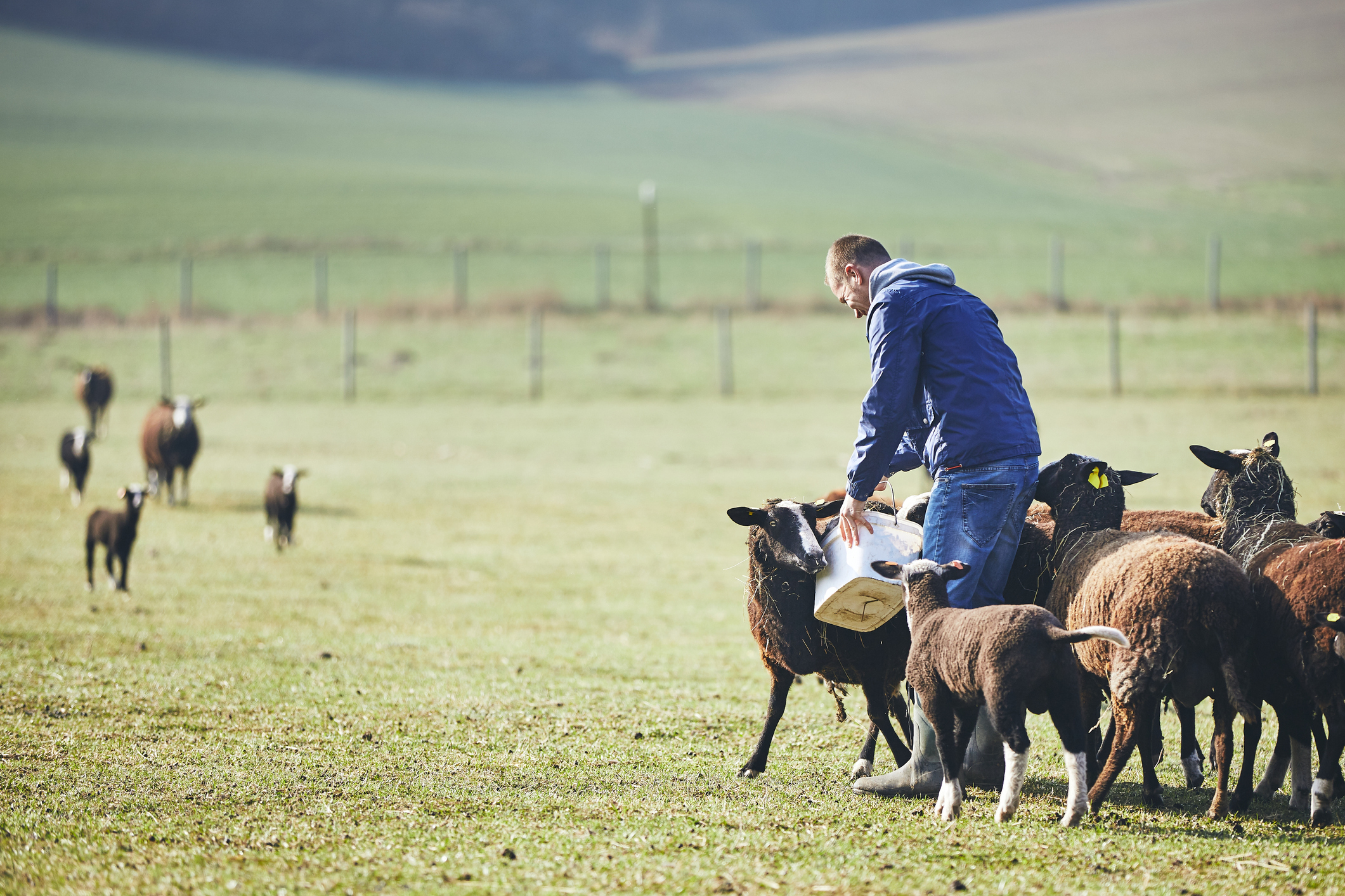 Free event at Somerset farm for sheep farmers to help minimises losses