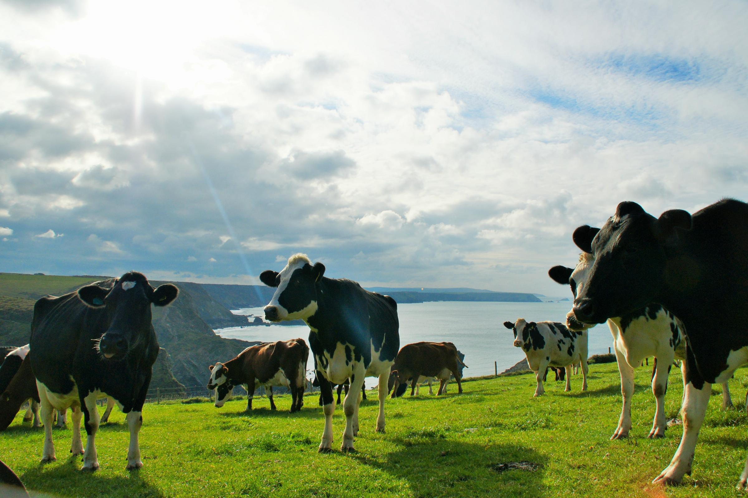 Stunning views for the cows!