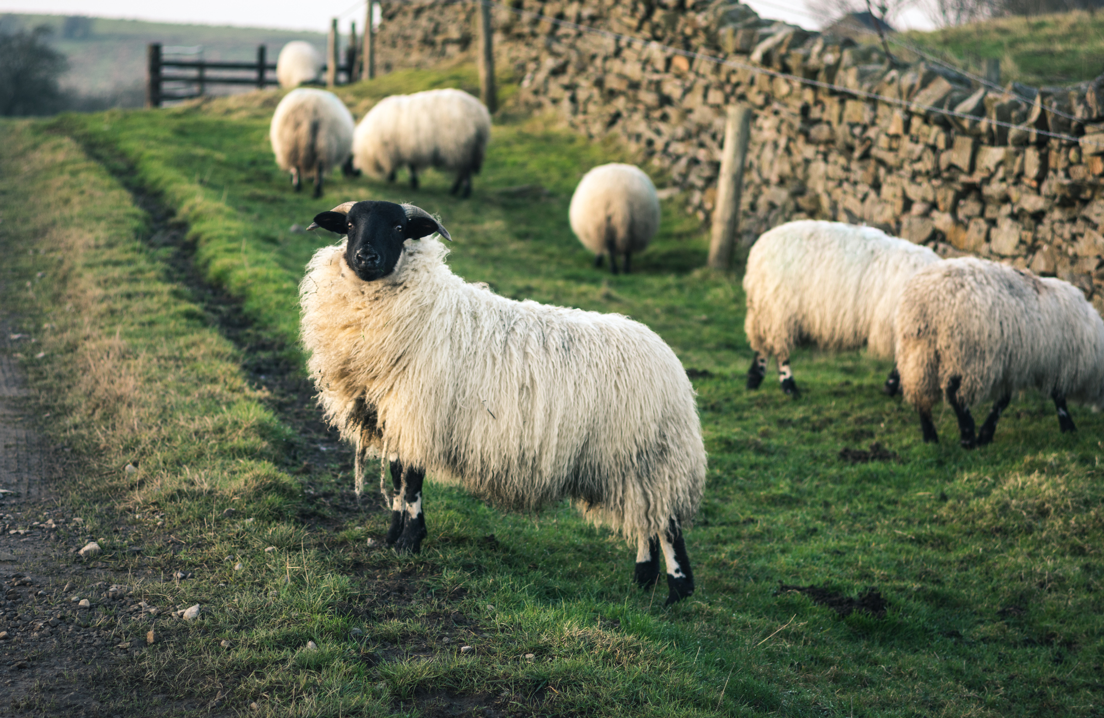 Breakthrough in battle against sheep dip disposal fees