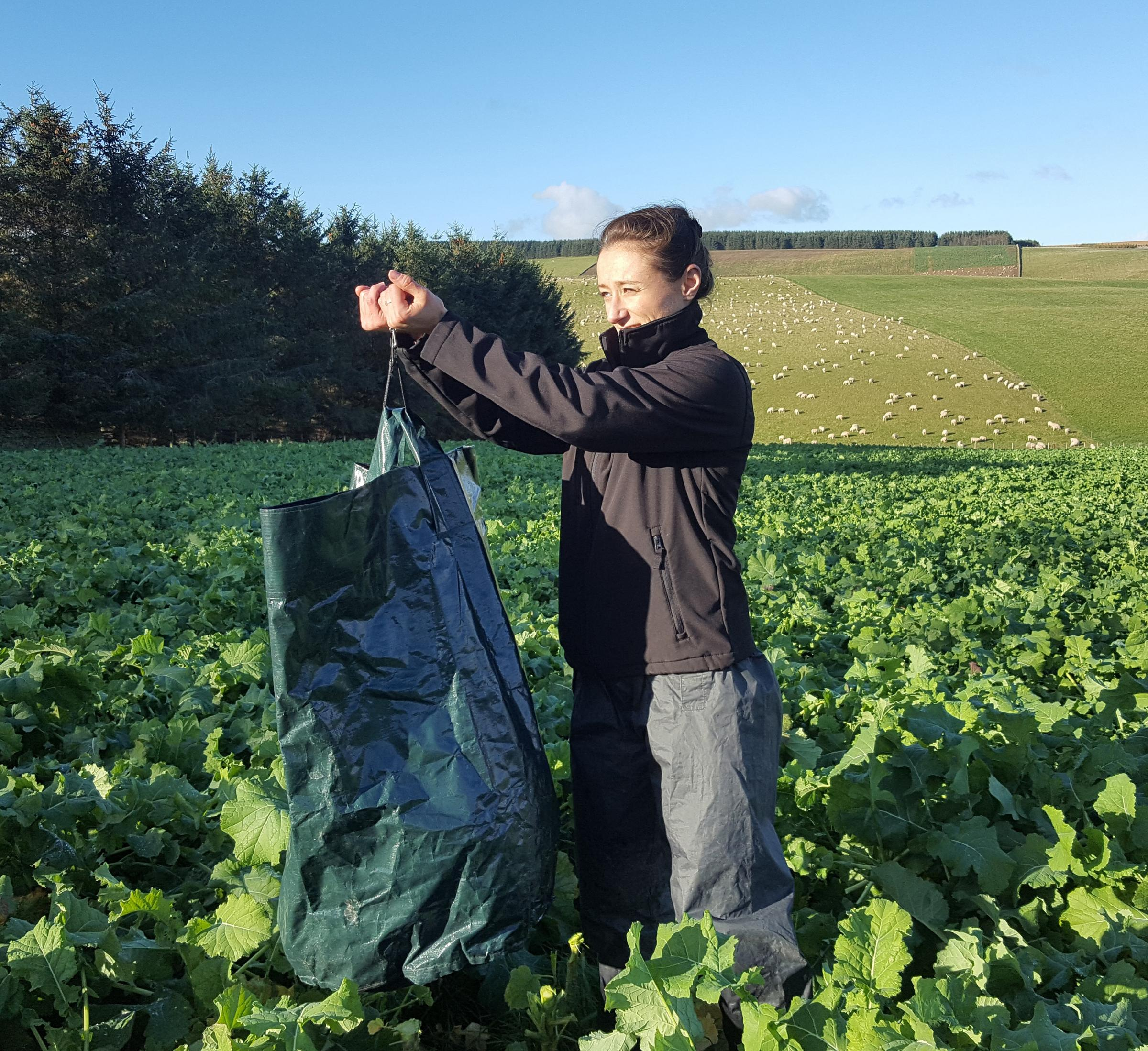 How to measure dry matter production and therefore maximise the utilisation of brassicas will be part of Germinal's knowledge transfer day on 16th January at Down Barn Farm.