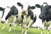 Free business appraisal for dairy farmers