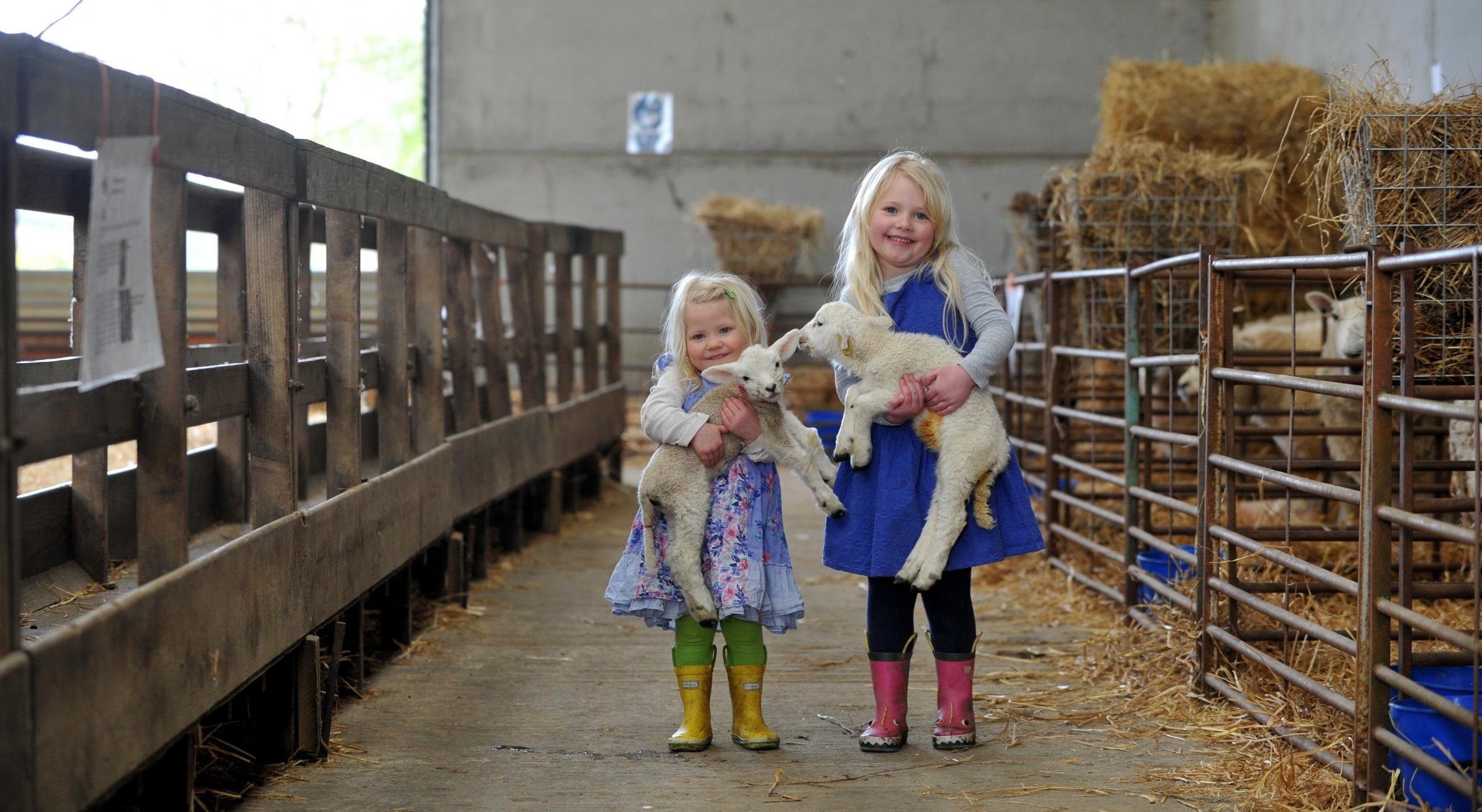 Children were able to get close to the lambs and witness several being born. image: Mikal Ludlow