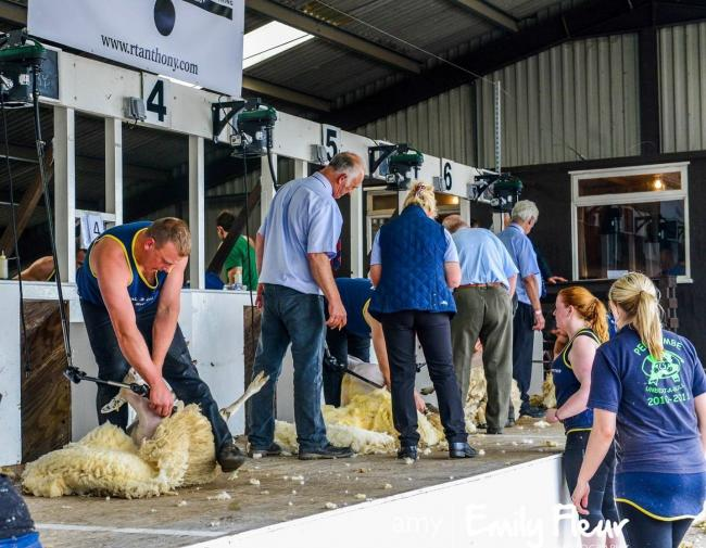 Work together to ensure sheep are handled appropriately this shearing season