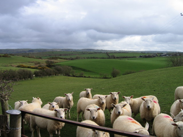 NSA say the recommendations misunderstand the UK sheep industry. Image: Ian Medcalf  geograph.org.uk