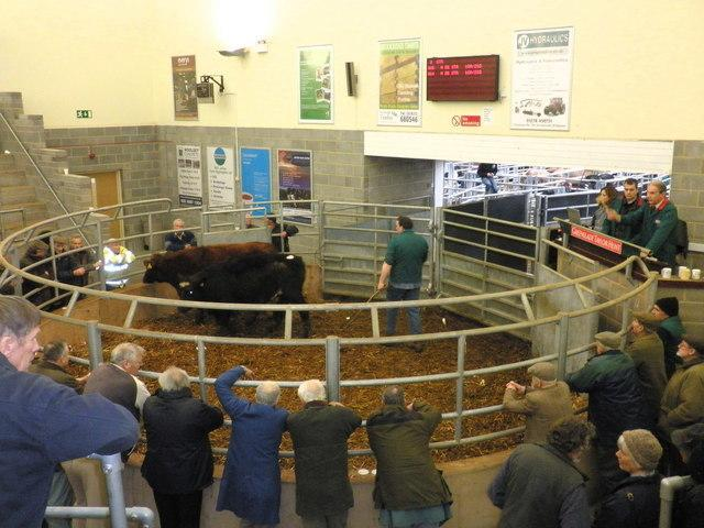 Results from Sdgemoor Auction, Saturday 1 June