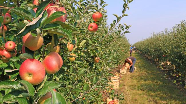 Access to labour crucial for future of Cornish horticulture